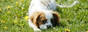 capas-para-facebook-cachorro