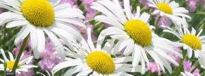 capas-para-facebook-flores