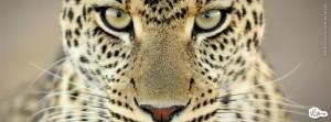 capas-para-facebook-tigre-2