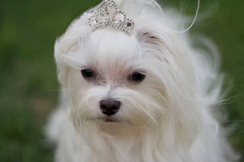 Mascotas, Perros, Gatos, Animales en Puerto Rico