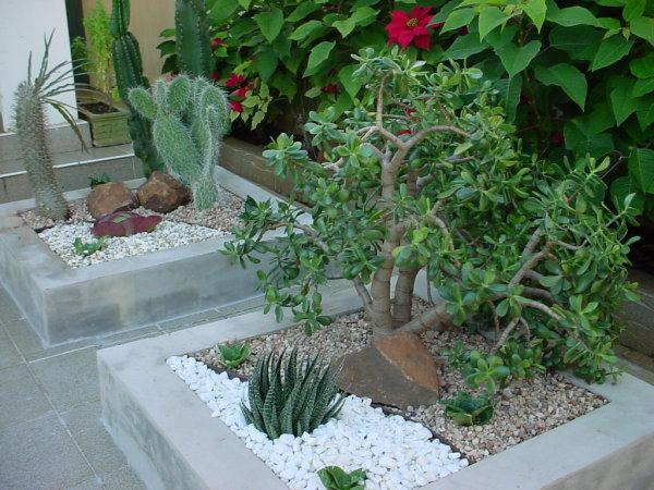 Jardim de inverno pequeno fotos e dicas for Jardins pequenos e simples
