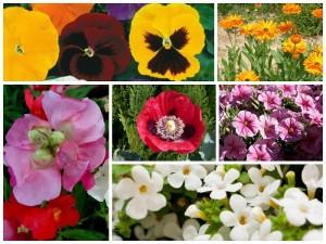Sugestões de Plantas para Jardim de Inverno: