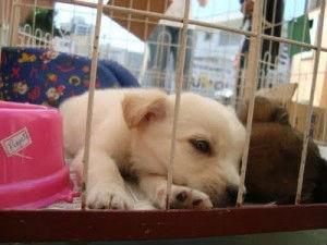 Filhotes de cachorro para adoçao