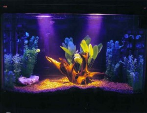 aquario-de-peixes-1
