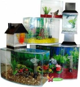 aquario-de-peixes-10