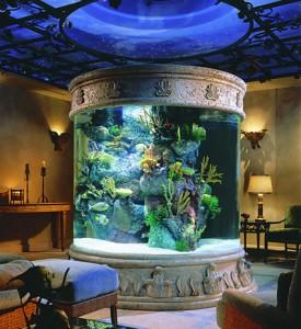 aquario-de-peixes-11