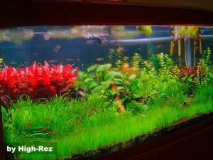 aquario-de-peixes-12