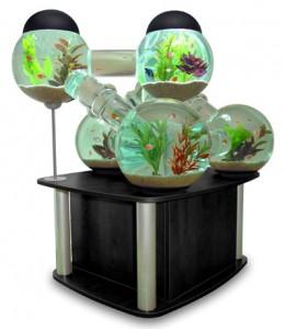 aquario-de-peixes-13