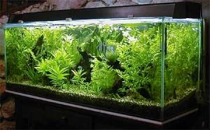 aquario-de-peixes-14