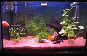aquario-de-peixes-15