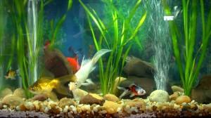 aquario-de-peixes-16