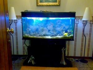 aquario-de-peixes-17