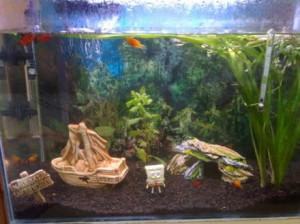 aquario-de-peixes-19