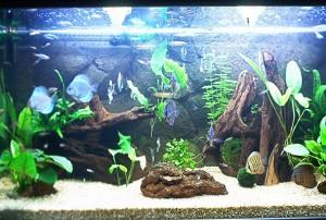aquario-de-peixes-2
