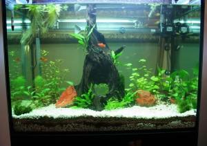 aquario-de-peixes-20