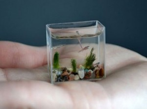 aquario-de-peixes-21