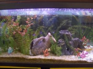 aquario-de-peixes-22