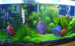 aquario-de-peixes-23
