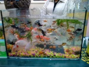 aquario-de-peixes-24