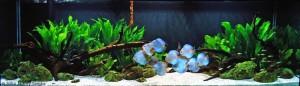 aquario-de-peixes-25