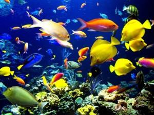 aquario-de-peixes-26
