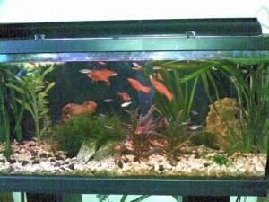 aquario-de-peixes-28