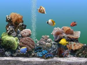 aquario-de-peixes-3