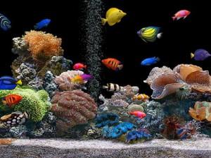Aquário de Peixes