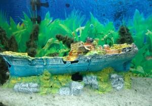 aquario-de-peixes-4