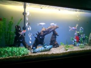 aquario-de-peixes-5