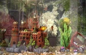aquario-de-peixes-6