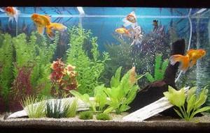 aquario-de-peixes-7