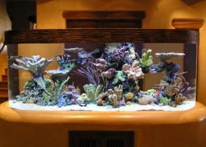 aquario-de-peixes-8