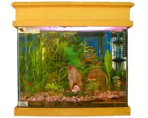 aquario-de-peixes-9