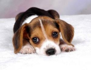 filhotes-de-cachorro-15
