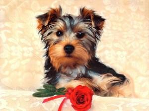 filhotes-de-cachorro-17