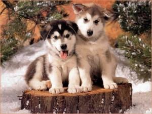 filhotes-de-cachorro-2