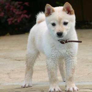 filhotes-de-cachorro-8