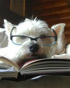 Cachorros Inteligentes